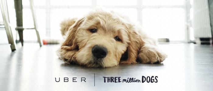 Uber 3 million dogs