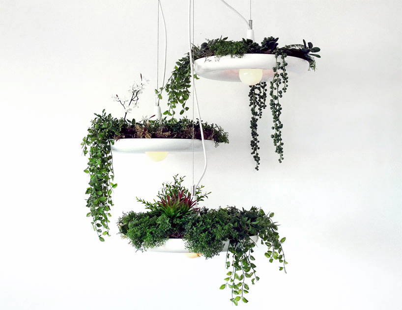 pinklion-design-WCIE1